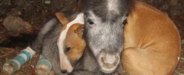Une retraitée sauve 60 animaux en créant un refuge