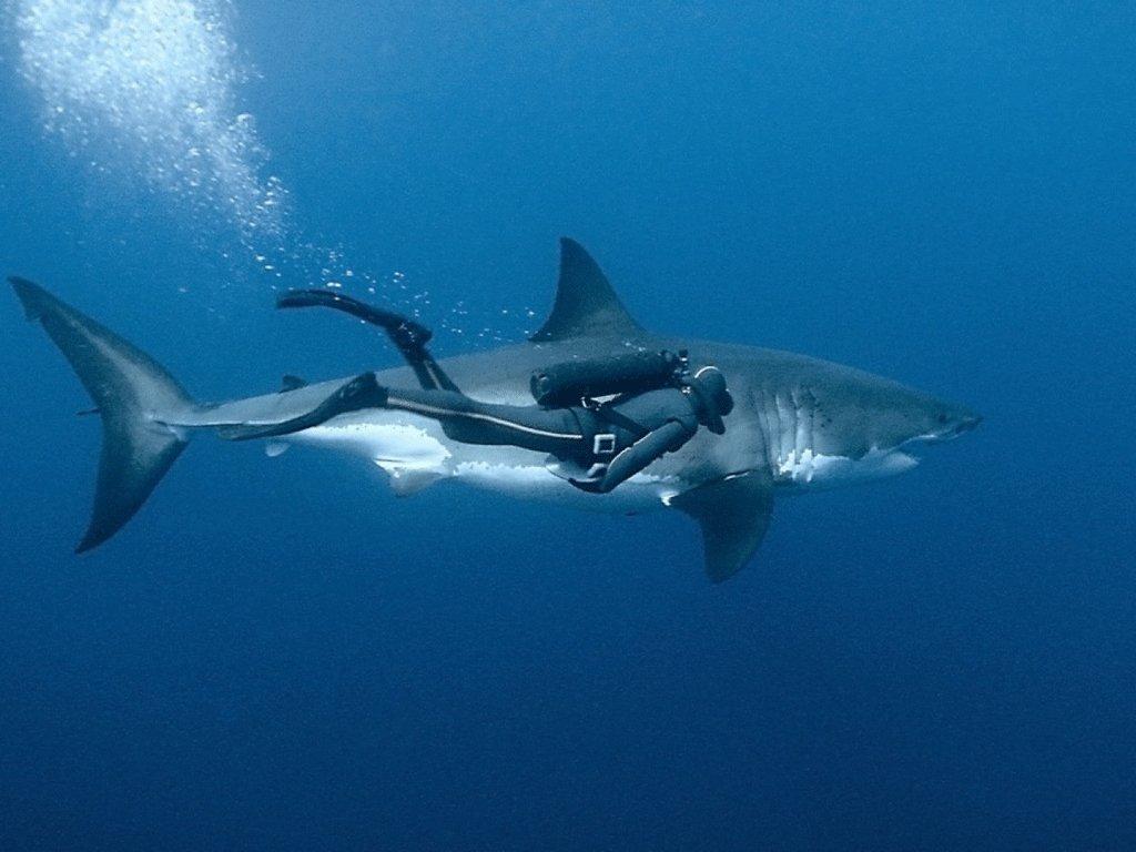 Rencontre avec Cristina Zenato, la femme-requin