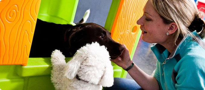Un couple de lesbiennes sauve une centaine de chiens d'une mort certaine